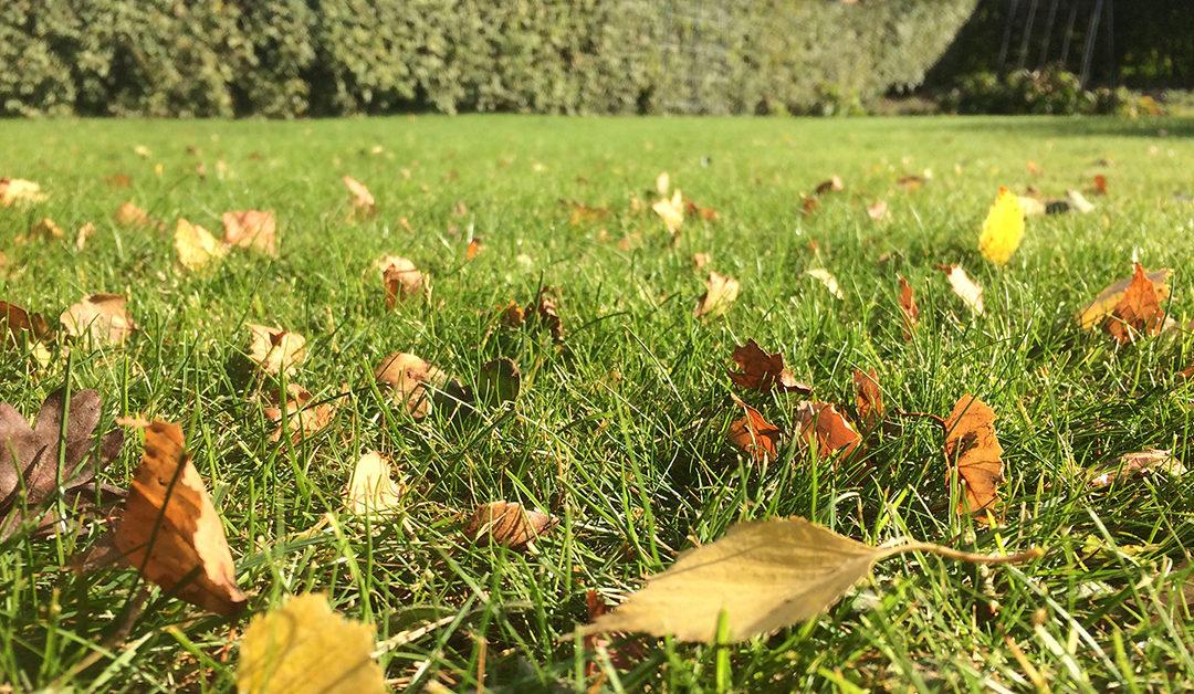 Haven i oktober