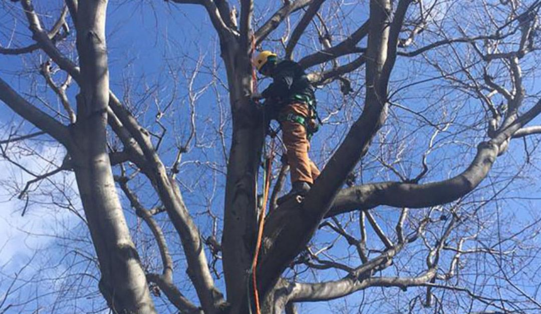 Af med toppen, træ!