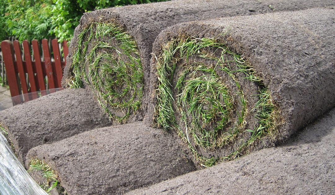 Sådan får du en flot græsplæne